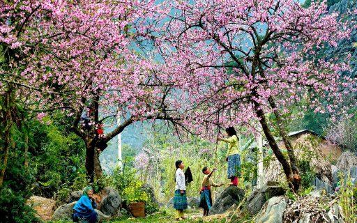 Bật mí top 10 điểm du lịch hot nhất ở Việt Nam vào dịp Tết Nguyên đán 2019